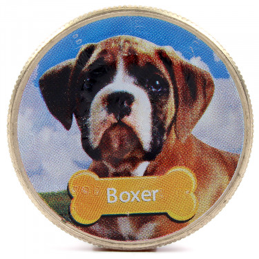 JFKennedy Boxer
