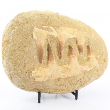 Mosasaur Jaws